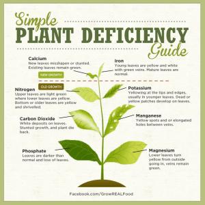 plant deficiency