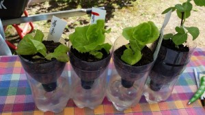 self-watering pot2