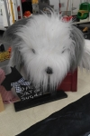Old english sheepdog - Lily