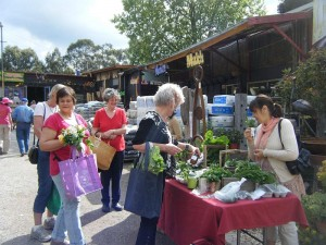 Veggie Swap at BAAG Nursery, Bulleen