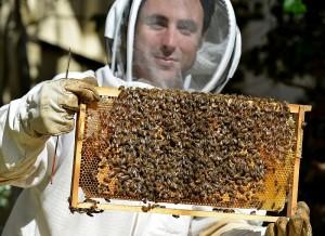 Peter Castaldo's Local Honey