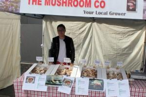 The Mushroom Co