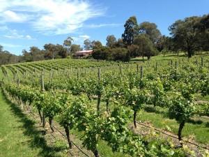 Yarrambat Estate Vineyard