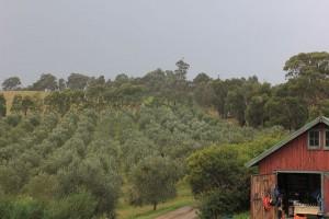 Hildebrand Grove