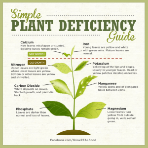 plant deficiency