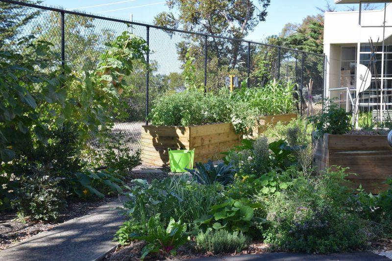 Watsonia Library Community Garden – Local Food Connect