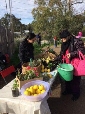 Urban Orchard Food Swap