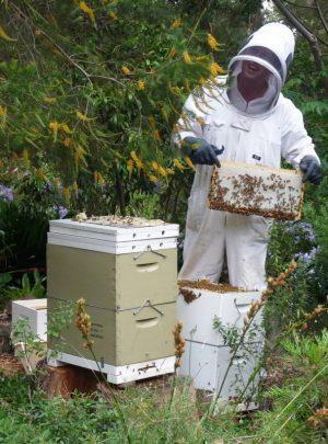 Backyard Honey