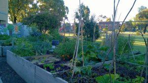 East Reservoir Community Garden