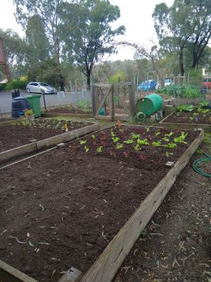 Living & Learning Nillumbik Community Veggie Garden, Eltham