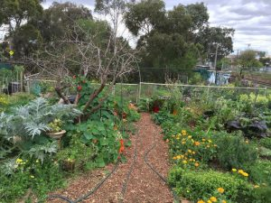 Northcote Community Gardens