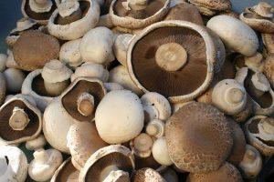The Mushroom Shed