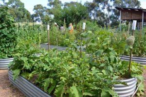 Glen Park Oaks Community Garden