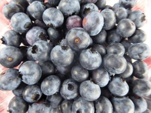 Kinglake West Blueberries