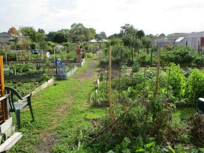 Croydon Community Garden