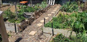 Hawthorn Community Gardens