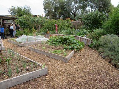 SEEDs Communal Garden