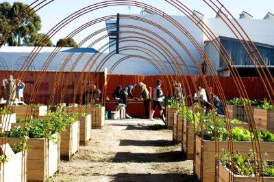 The Veggie Spot – Lygon Street Community Garden