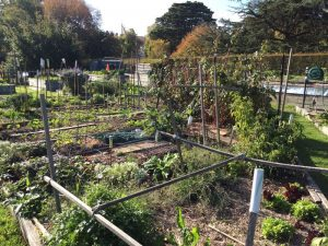 Canterbury Community Garden