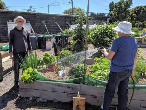 Pentridge Community Garden
