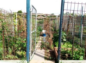 Doncaster Community Gardens