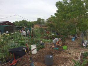 Fairfield Community Garden