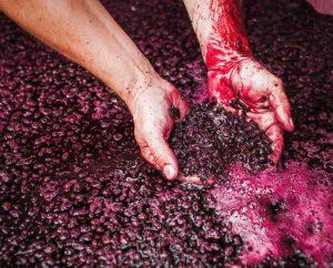 Rob Dolan Wines