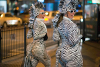 Born In A Taxi's zebras wowed both the children and the adults with their prancing, preening and dancing.