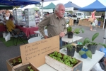 Peter Dougherty sold compost/biochar plus rhubarb and lettuce seedlings.